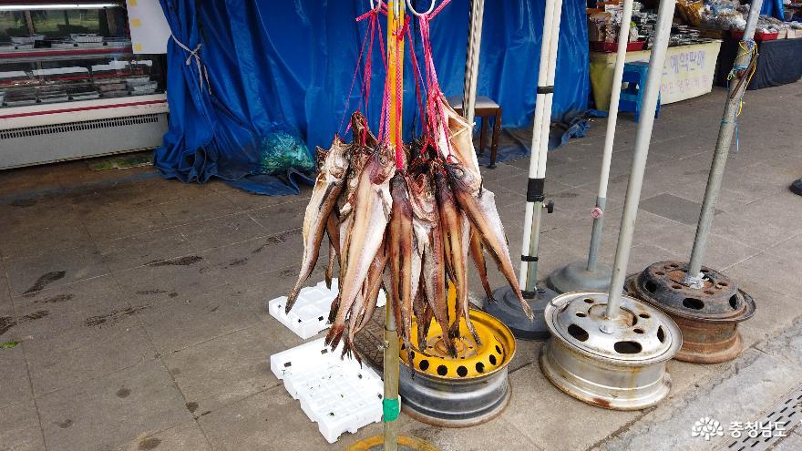 널려있는 물고기