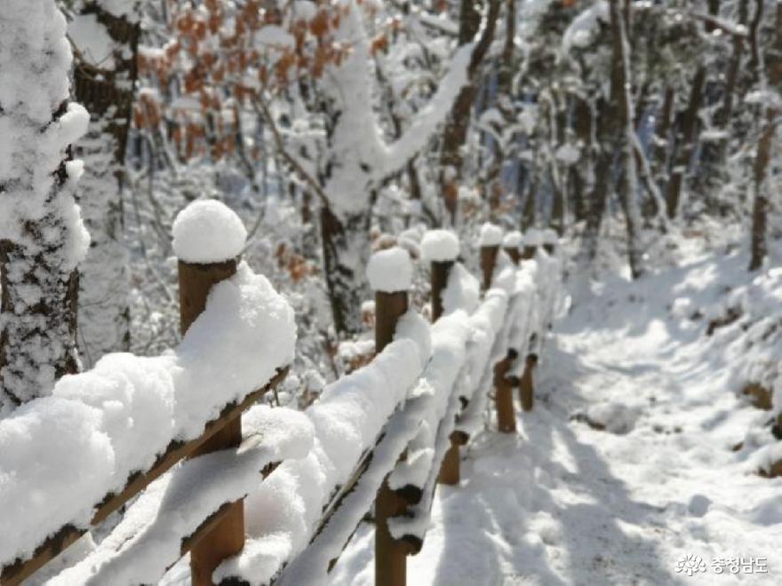 눈꽃을 가득 피운 광덕산 사진