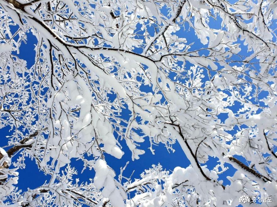 [통통충남]눈꽃을 가득 피운 광덕산