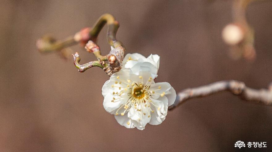 세상에서 가장 아름다운 '천리포수목원'으로 봄 마중 가요
