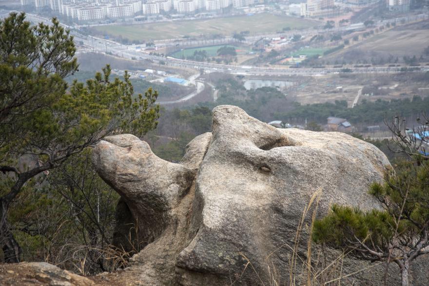 거북이 형상의 바위 모습