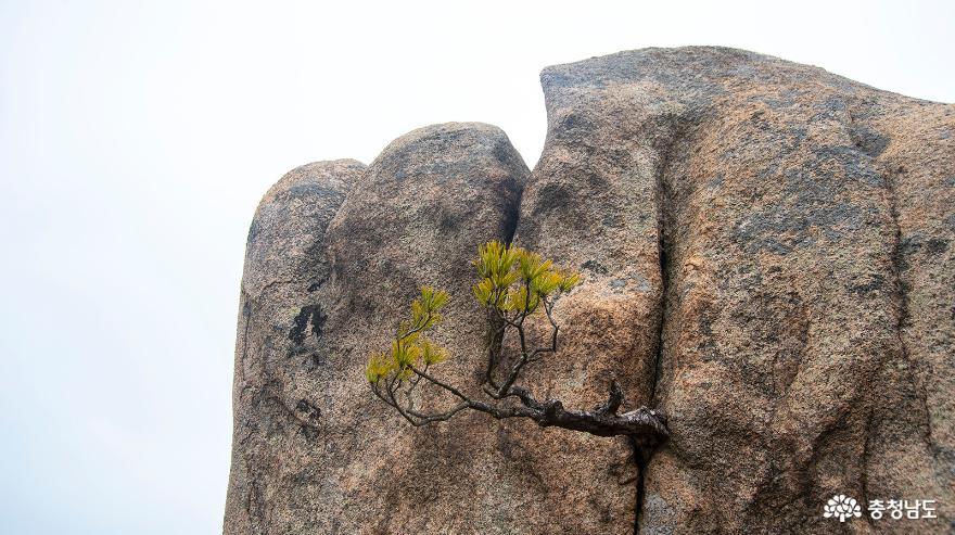 제2의 금강산, 진달래 피는 홍성 용봉산의 아름다운 경치