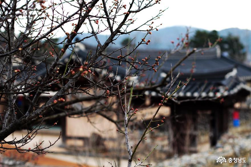 한 걸음 한 걸음 기억이 깃든 아산 외암리민속마을에 찾아온 봄!!