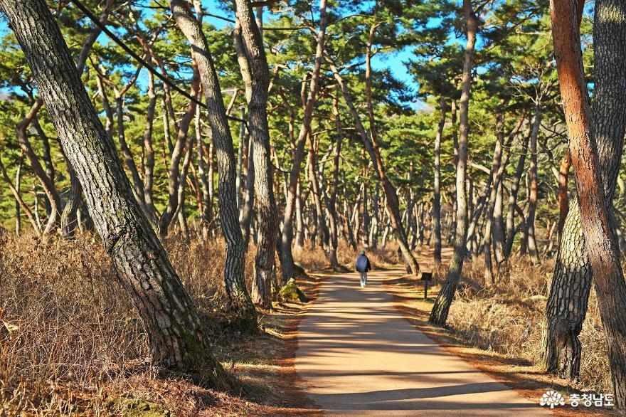 아름다운 자연이 있는 천년의숲길을 걸어 보자