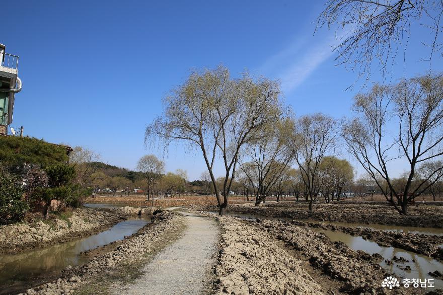 궁남지, 버드나무, 봄의 기운이 피어나는 공간