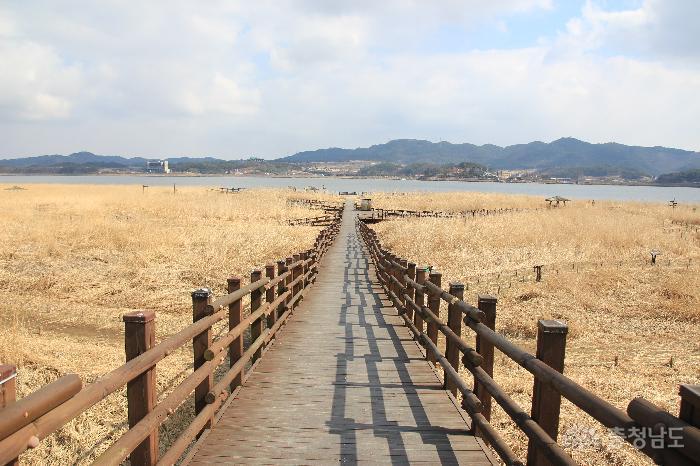 낭만 여행지, 서천 신성리갈대밭