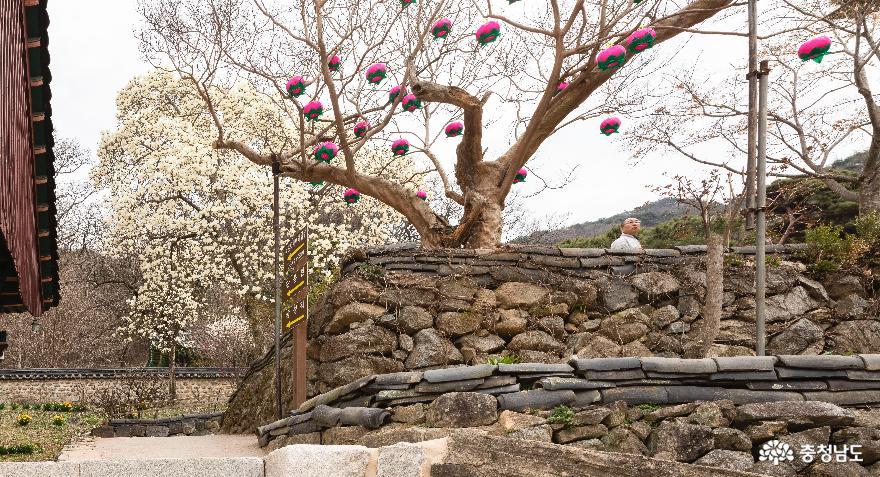 대웅전 옆 배롱나무에 핀 연등꽃