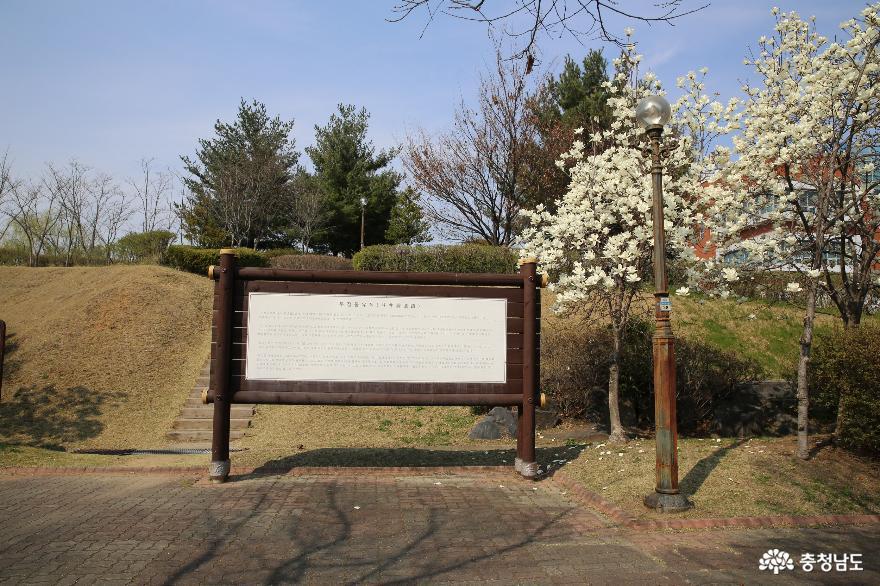 봄꽃이 피어 있는 천안 두정동 유적지에서 3