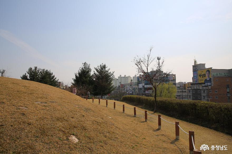봄꽃이 피어 있는 천안 두정동 유적지에서 10