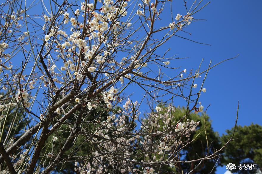 봄은 왔지만 조용하게 침묵을 지키고 있는 부여 8