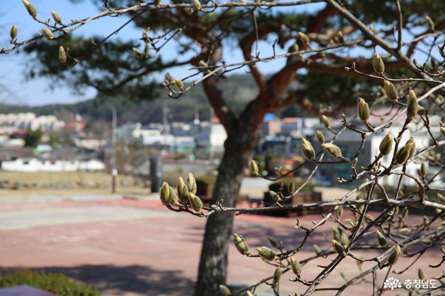 봄은 왔지만 조용하게 침묵을 지키고 있는 부여 9