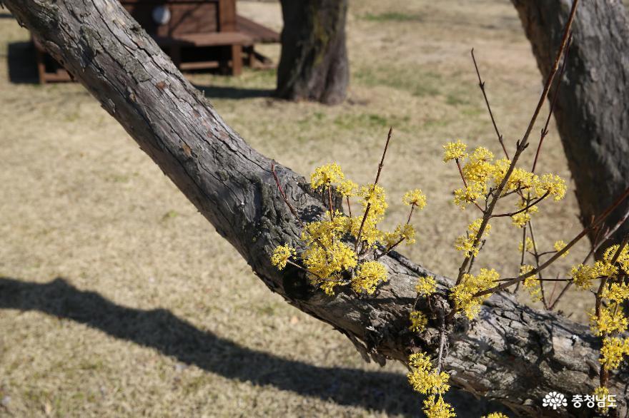 봄은 왔지만 조용하게 침묵을 지키고 있는 부여 10