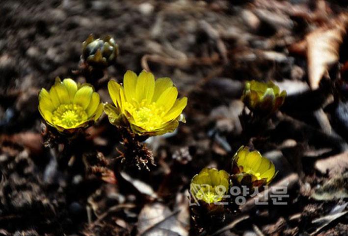 코로나19 창궐해도 봄꽃은 피어나고