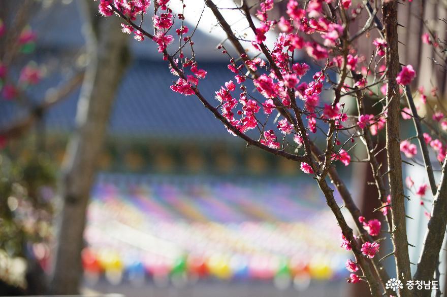 봄날, 견지망월의 화두를 찾아 떠난 여행 사진