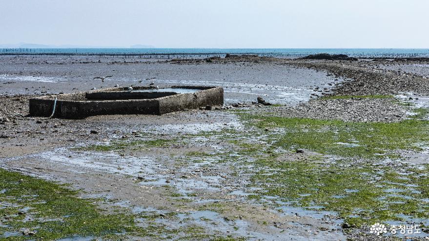 물이 빠진 갯벌의 모습