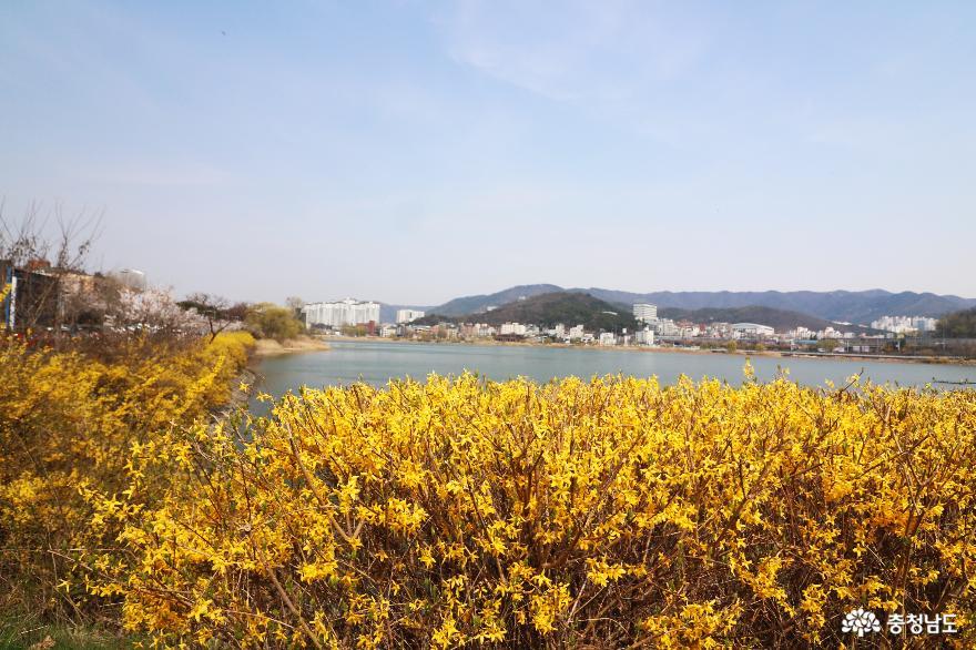 봄바람 흩날리는~ 천호지 벚꽃길을 걸으며!
