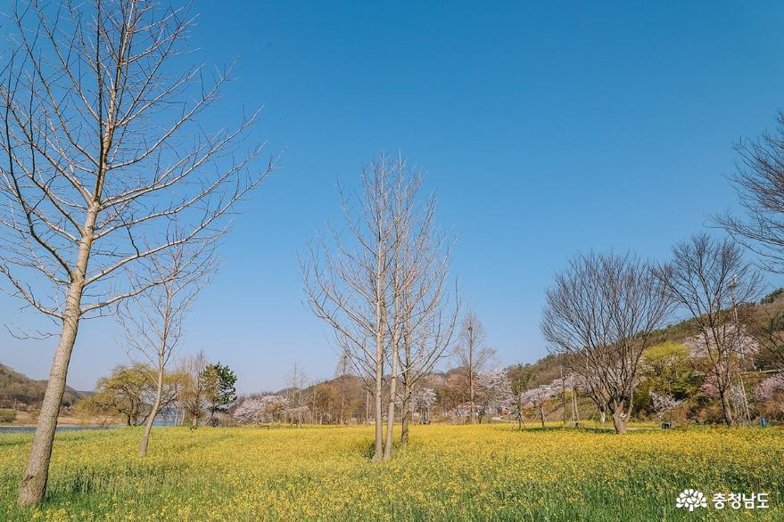 금강을 따라 조용한 유채꽃밭 산책, 석장리 계절별 꽃단지