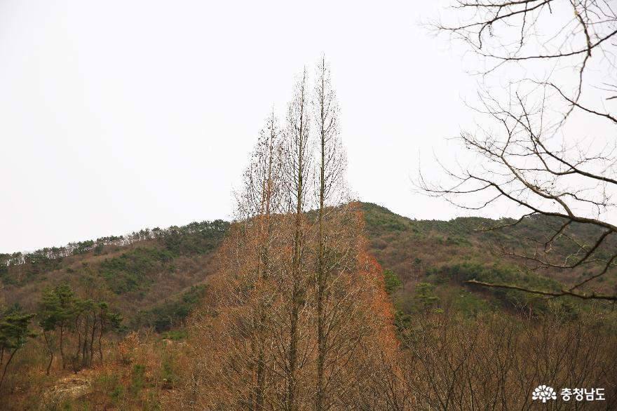 차분히 바라본 공주 송곡지 풍경 3