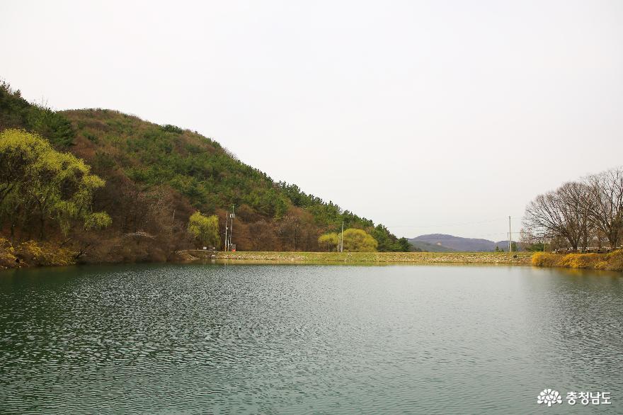 차분히 바라본 공주 송곡지 풍경 5