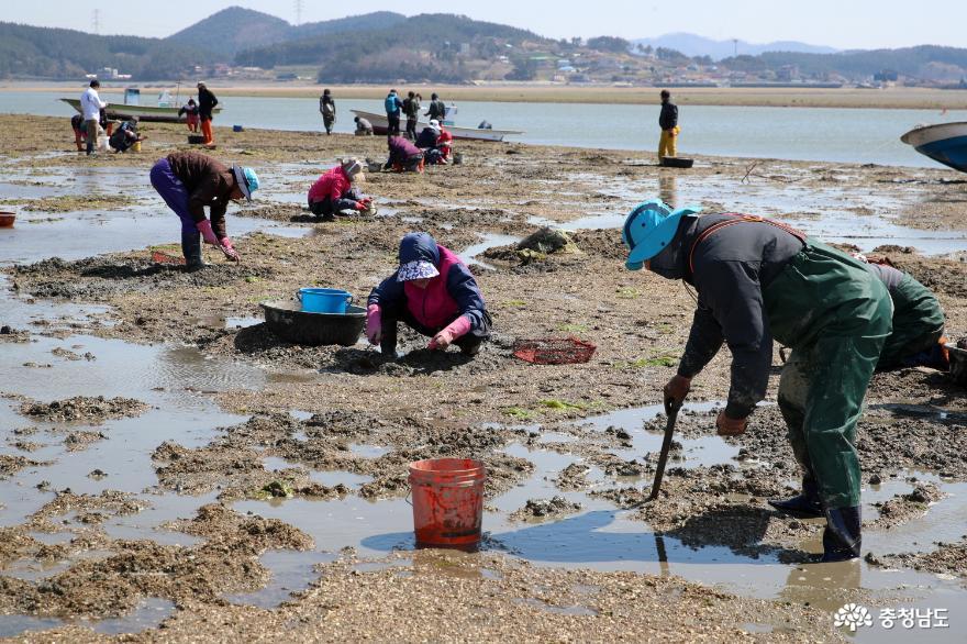 태안군, 국민디자인단과 함께하는 '통통(通通)한 어촌마을 만들기'
