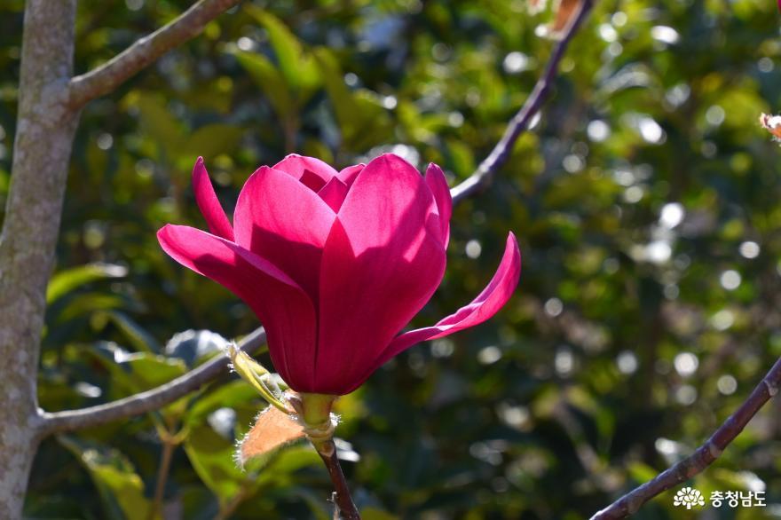 천리포수목원의 향긋한 봄