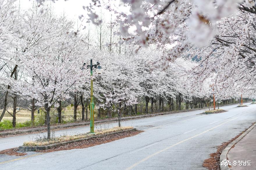 아산 서남대학교(폐교됨)