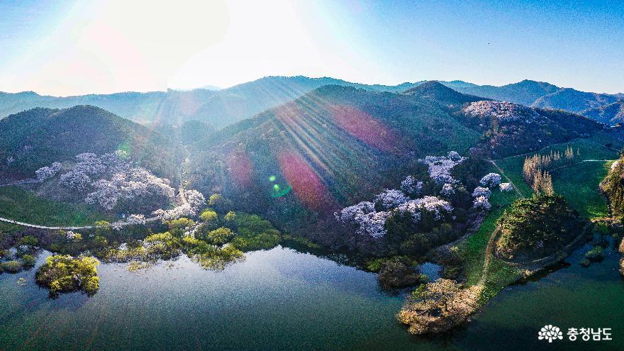 산 벚꽃 핀 서산 용유지의 아침