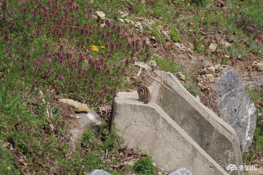 금오산 다람쥐