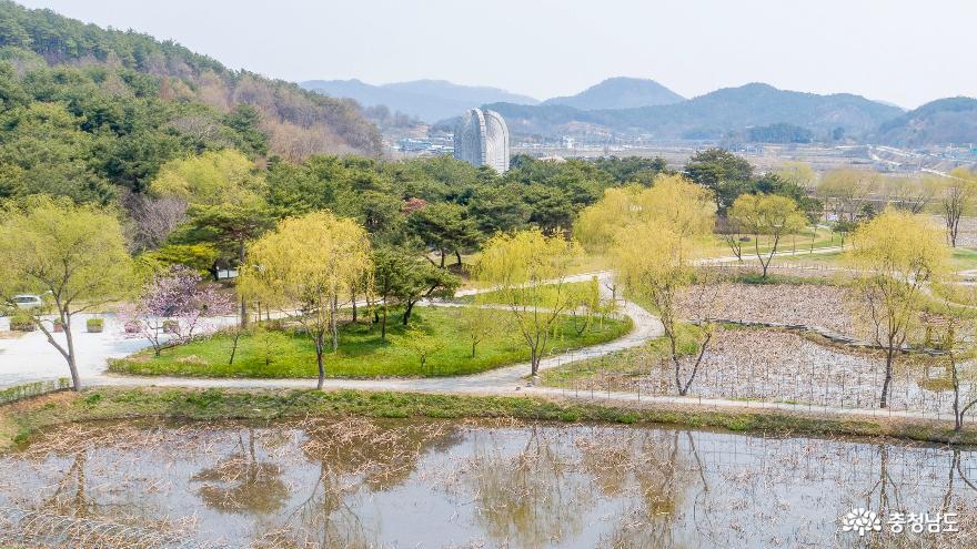 드론으로 본 싱그러운 궁남지의 봄 연밭 풍경