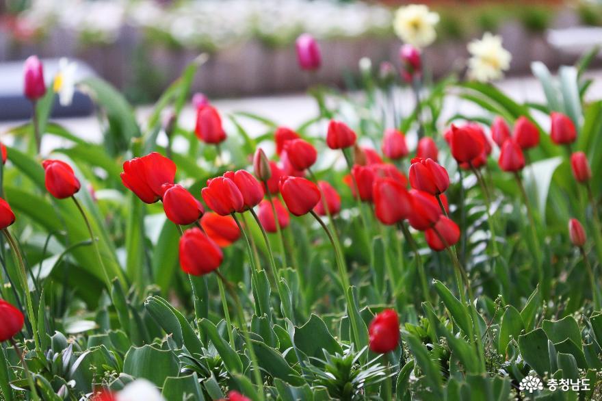 신비로운 꽃과 나무가 가득한 아름다운정원 화수목 1