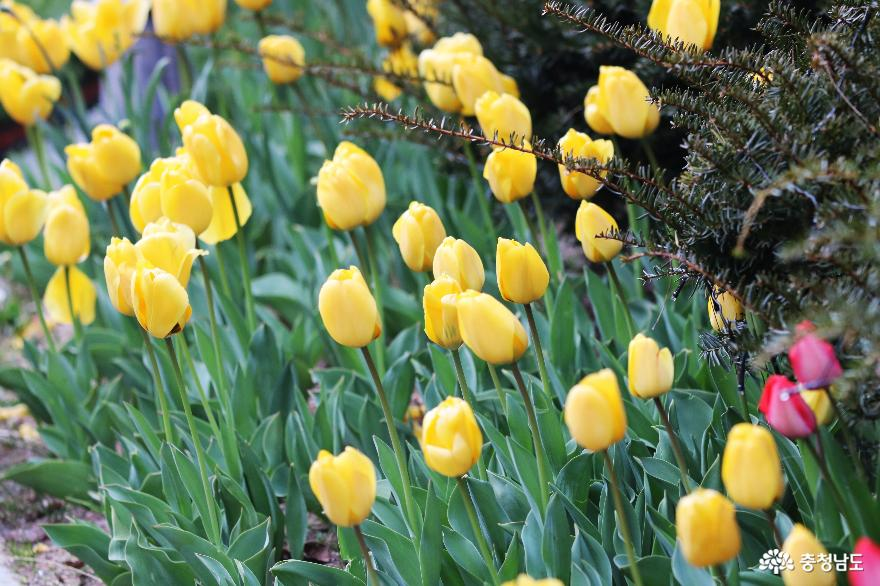 신비로운 꽃과 나무가 가득한 아름다운정원 화수목 3