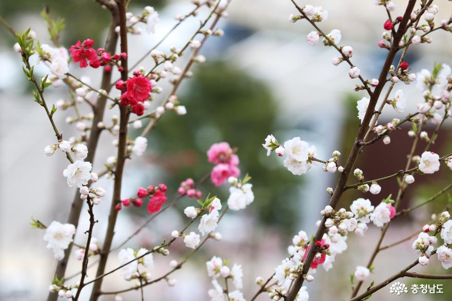 신비로운 꽃과 나무가 가득한 아름다운정원 화수목 8