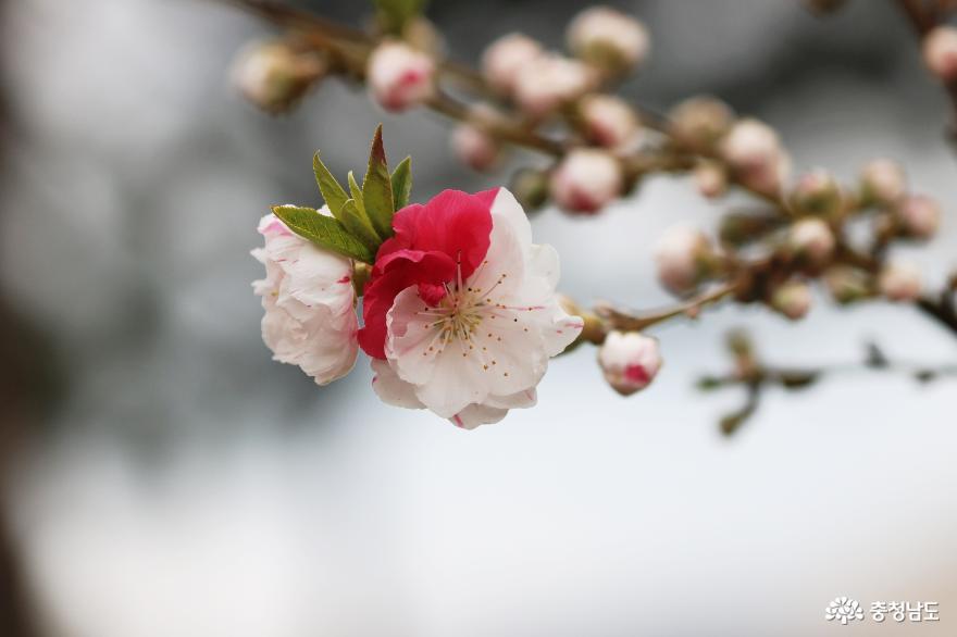 신비로운 꽃과 나무가 가득한 아름다운정원 화수목 9