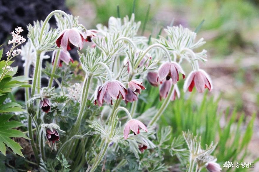 신비로운 꽃과 나무가 가득한 아름다운정원 화수목 10