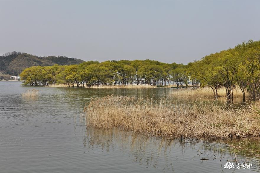 봄꽃 가득한 아산 신정호공원 1