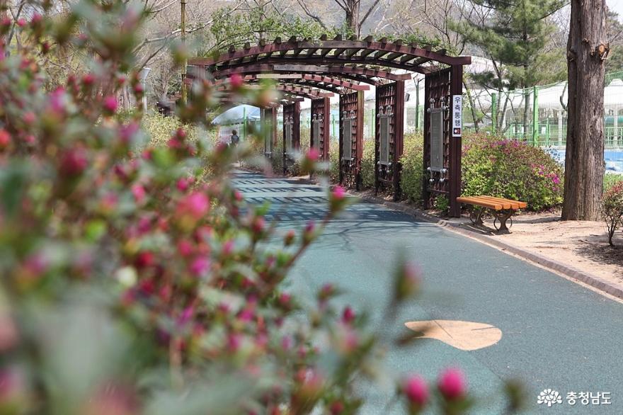 봄꽃 가득한 아산 신정호공원 4