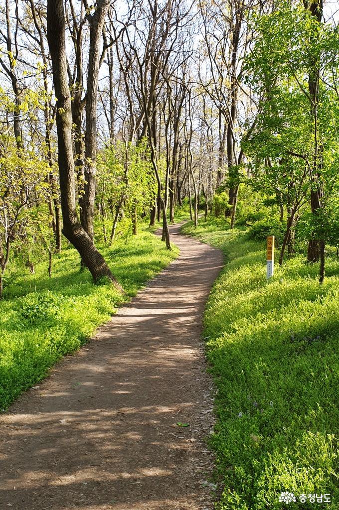 봄빛 싱그럽고 화사한 홍성 남산 산책 1