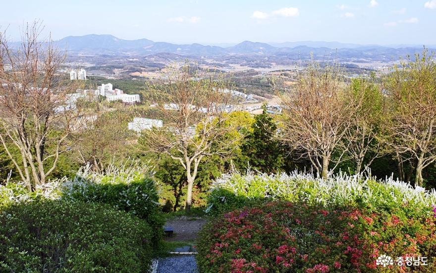 봄빛 싱그럽고 화사한 홍성 남산 산책 2
