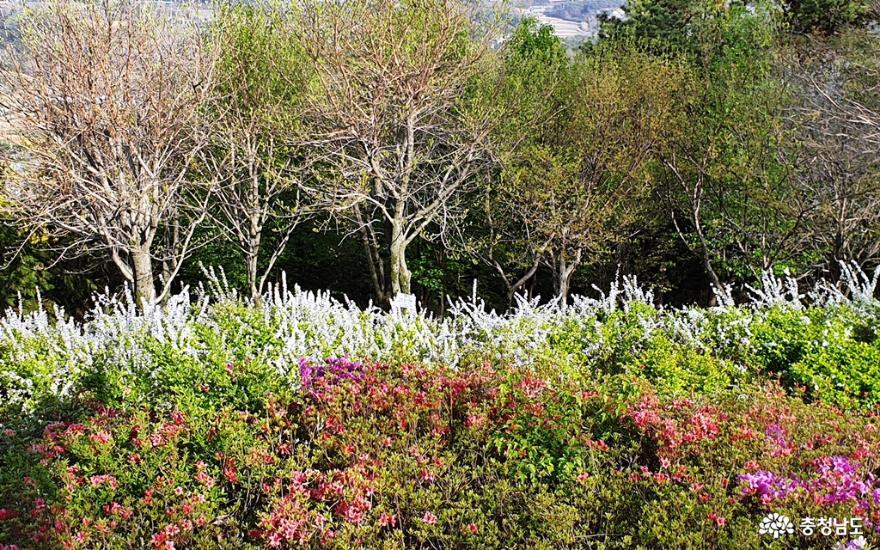 봄빛 싱그럽고 화사한 홍성 남산 산책 5