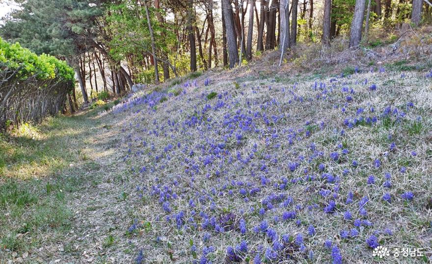 봄빛 싱그럽고 화사한 홍성 남산 산책 7