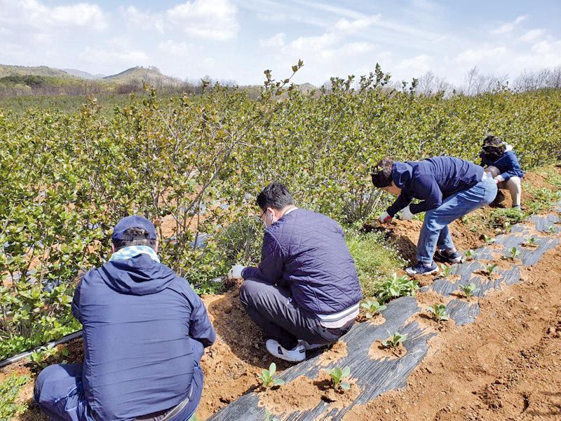 봄나물 수확 일손돕기