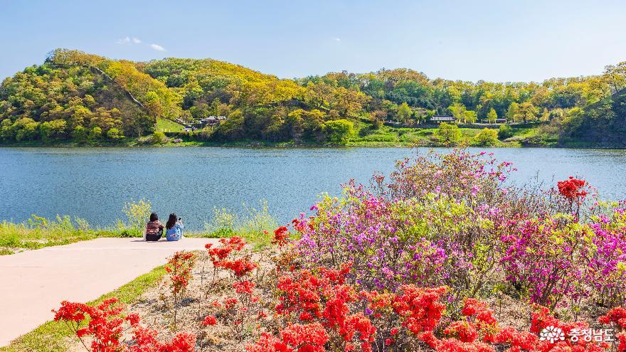 '코로나19 주춤' 금강변 미르섬 주말 나들이 풍경