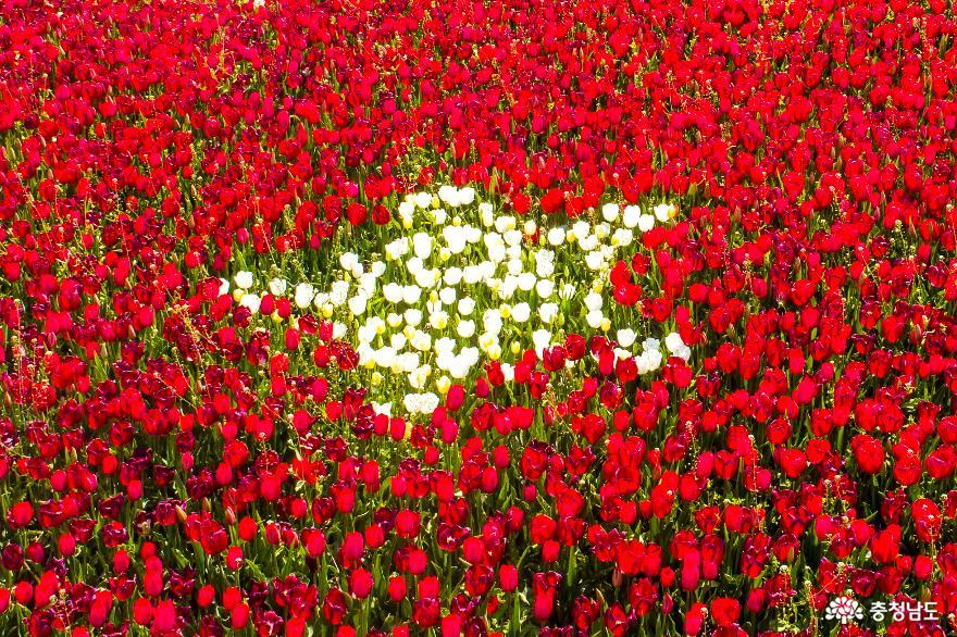 꽃과 바다의 도시 태안, 코리아플라워파크에서 튤립에 취하다
