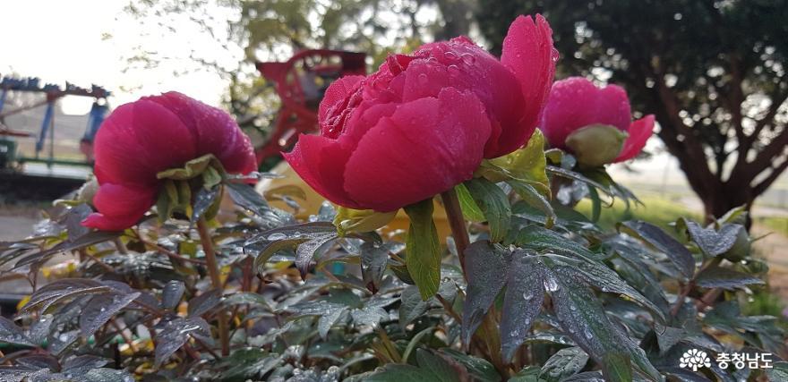 한옥 창호의 꽃살문을 닮은 들꽃의 매력 4