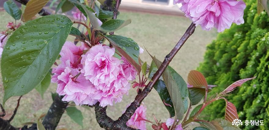 한옥 창호의 꽃살문을 닮은 들꽃의 매력 7