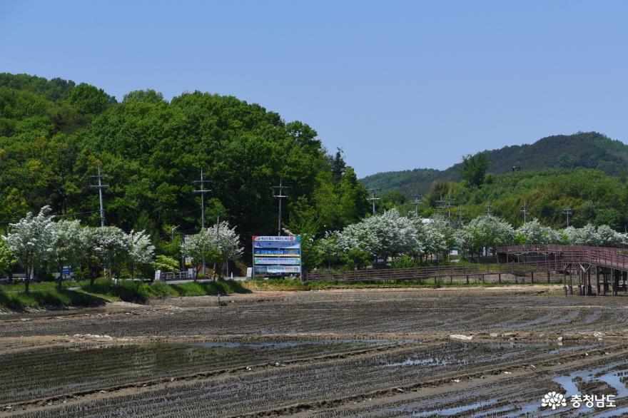 느린호수길과 이팝나무