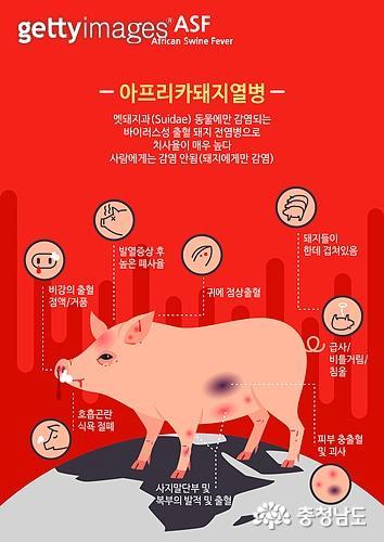 돼지열병 재확산, 홍성축산농가 방역 비상