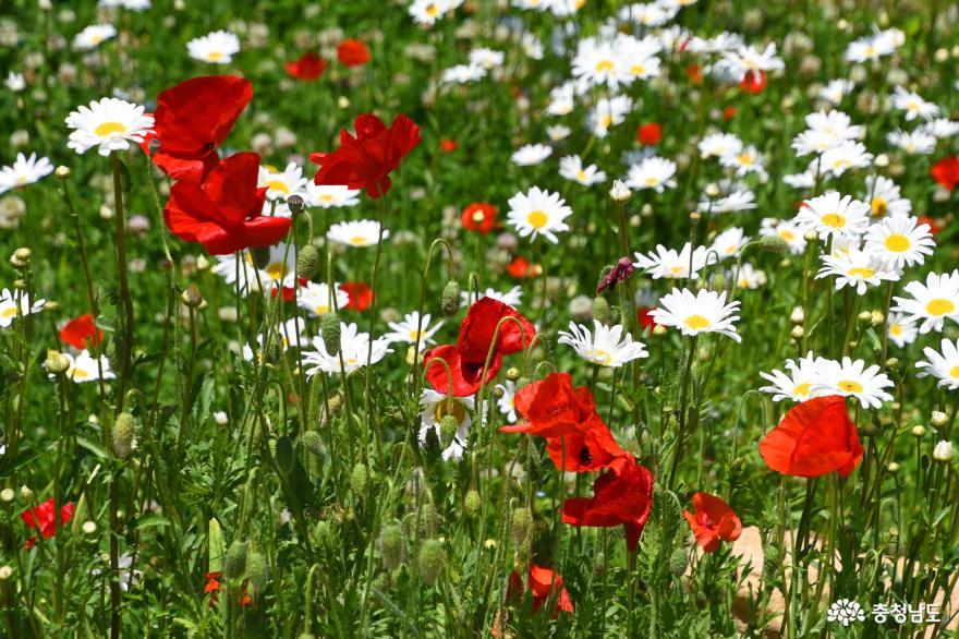 봉수산성지에 피어난 꽃