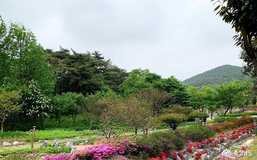 봄꽃 가득한 당진 삼선산수목원 사진