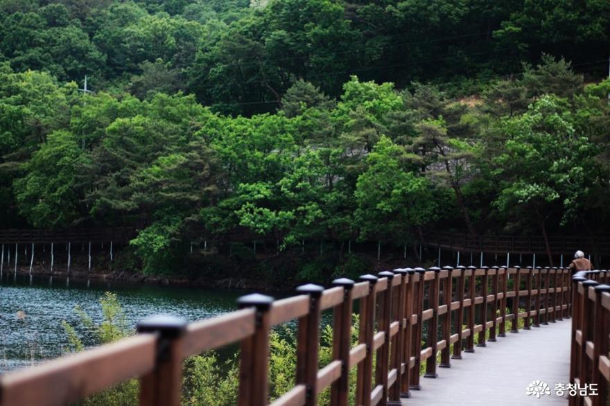 금계국길 따라 아카시아향 진한 천흥저수지 둘레길 위에서 사진